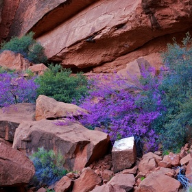 Color behind Tuacahn
