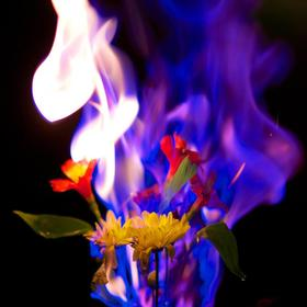 Flowers on Fire